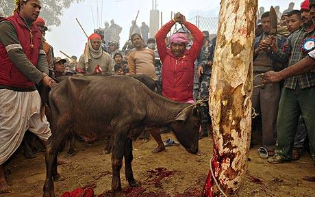 animal kill